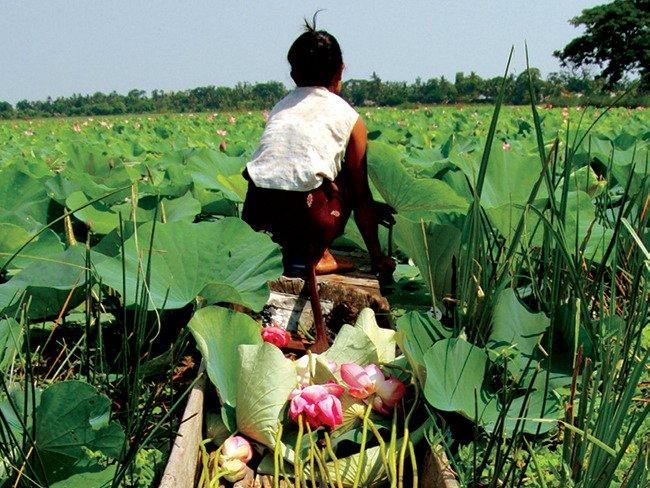 loro piana birmania