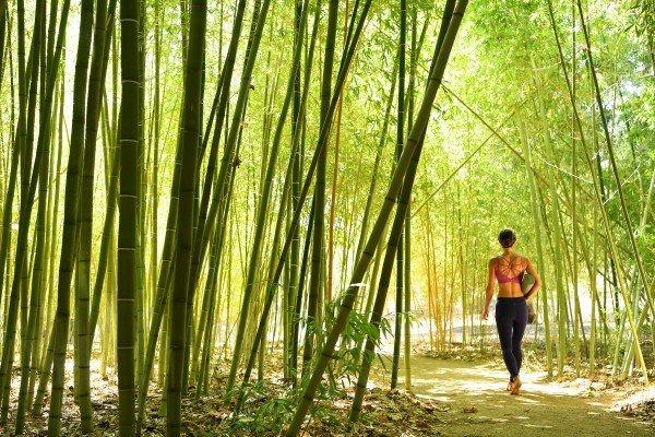 Golden-door-spa-bosque-bambú-TheLuxuryTrends