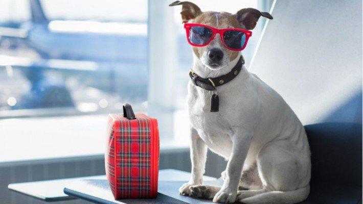 Critterati, el hotel de lujo para perros