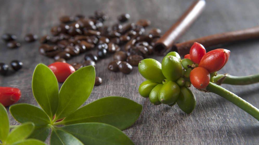 kopi-luwak-bayas-de-cafe-TheLuxuryTrends